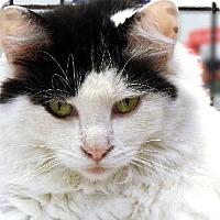 Adopt A Pet :: ALYX - Toledo, OH