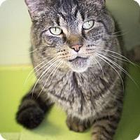 Adopt A Pet :: Seamus - Indianapolis, IN