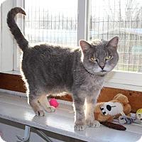 Adopt A Pet :: Delilah - Washburn, MO