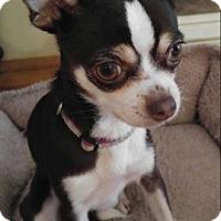 Adopt A Pet :: Mini - Matthews, NC
