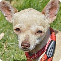 Adopt A Pet :: Scarlett - Meridian, ID