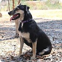 German Shepherd Dog Mix Dog for adoption in San Diego, California - Mamma