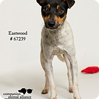Adopt A Pet :: Eastwood - Baton Rouge, LA