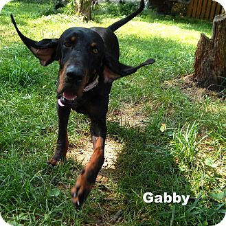 Black and Tan Coonhound Mix Dog for adoption in Washington, Pennsylvania - Gabby