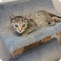 Adopt A Pet :: Quintessa - Chippewa Falls, WI