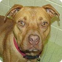 Adopt A Pet :: HAGGIS - Aiken, SC