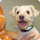 Adopt A Pet :: Kenneth