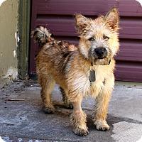 Adopt A Pet :: Bertie - Los Angeles, CA