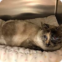 Adopt A Pet :: Hera - Maryville, MO