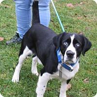 Adopt A Pet :: Boo Boo - Elkins, WV