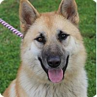 Adopt A Pet :: DORY - Red Bluff, CA