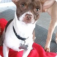 Adopt A Pet :: Zephyr - Phoenix, AZ