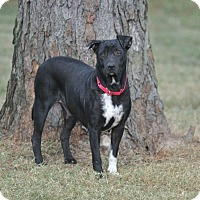 Adopt A Pet :: Mallory - Bend, OR