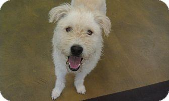 Labradoodle Mix Dog for adoption in New Windsor, New York - OLIVER