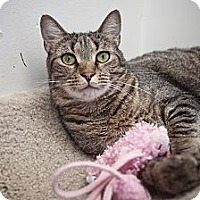Adopt A Pet :: Nigel - Chesapeake, VA