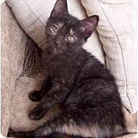 Adopt A Pet :: Missouri - Alexandria, VA