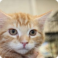 Adopt A Pet :: Cheeto - Santa Monica, CA
