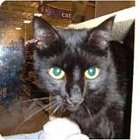 Adopt A Pet :: Jamie - No.Charleston, SC