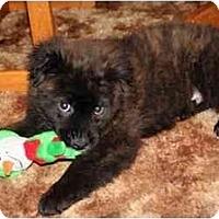 Adopt A Pet :: Krusty - Racine, WI