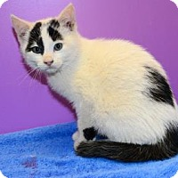 Adopt A Pet :: Spock - Suwanee, GA