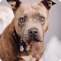 Adopt A Pet :: Laverne - Portland, OR