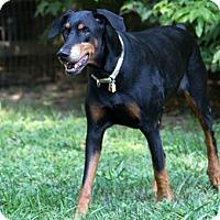 Adopt A Pet :: Meshka - Greensboro, NC