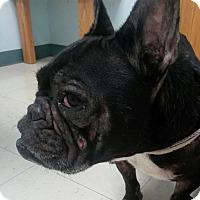 Adopt A Pet :: Dozer - Columbus, OH