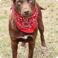 Adopt A Pet :: Boomer - Haggerstown, MD