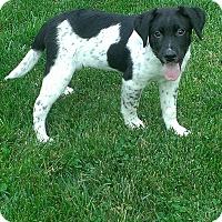 Adopt A Pet :: Kodiak - New Oxford, PA