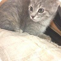 Adopt A Pet :: January - Camden, DE