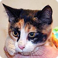 Adopt A Pet :: 315728 - Wildomar, CA