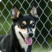 Husky Mix Dog for adoption in chouteau, Oklahoma - Frankie