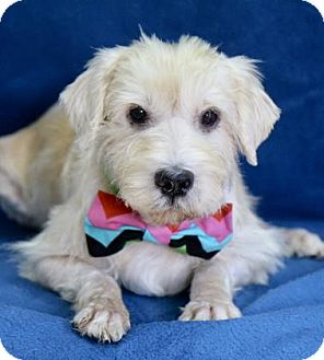 Terrier (Unknown Type, Small) Mix Dog for adoption in Picayune, Mississippi - Bob