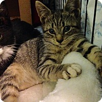 Adopt A Pet :: Elaine - East Brunswick, NJ