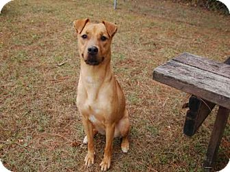 Terrier (Unknown Type, Medium) Mix Dog for adoption in Panama City, Florida - PUMPKIN