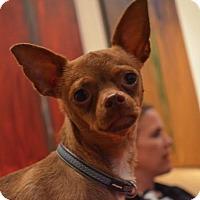 Adopt A Pet :: Durant - Burlingame, CA