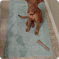 Adopt A Pet :: Quest - Westminster, CO