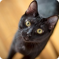 Adopt A Pet :: Bennie - Vancouver, BC