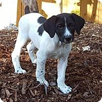 Adopt A Pet :: Douglas - Key Largo, FL