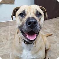Adopt A Pet :: Buddy - Chico, CA