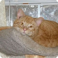 Adopt A Pet :: Butch - Marion, WI
