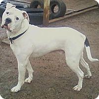 Adopt A Pet :: Jobe - Toledo, OH