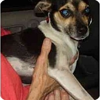 Adopt A Pet :: Anabelle - Miami, FL