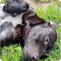 Adopt A Pet :: Baity - Orlando, FL