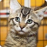 Adopt A Pet :: Bam Bam - Irvine, CA