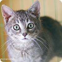 Adopt A Pet :: Pearl & Hazel - Island Park, NY