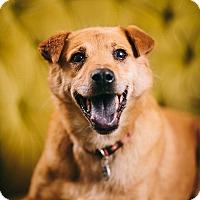 Adopt A Pet :: Hailey - Portland, OR