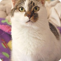 Adopt A Pet :: Betsy - Knoxville, TN
