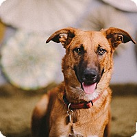 Adopt A Pet :: Abby - Portland, OR