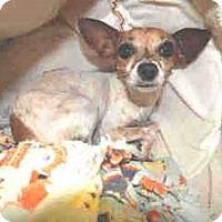 Adopt A Pet :: ON EUTHANASIA LIST - Only $25! - Litchfield Park, AZ